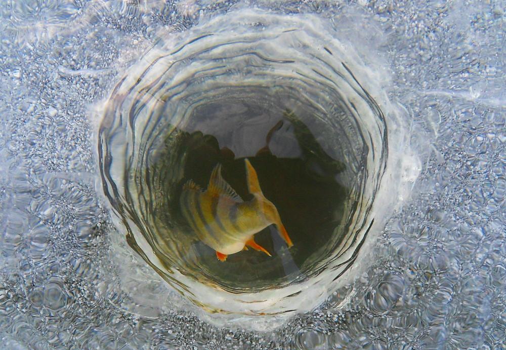 ловить рыбу на теплой воде
